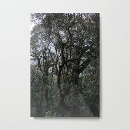 MOSSY FOREST II Metal Print