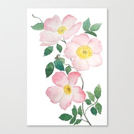 pink rosa rubiginosa watercolor Canvas Print