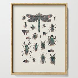 Collection of Insects Serving Tray