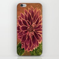 dahlia iPhone & iPod Skins featuring Dahlia  by maggs326