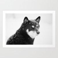 shiba Art Prints featuring Shiba by Megan Simonson Photography