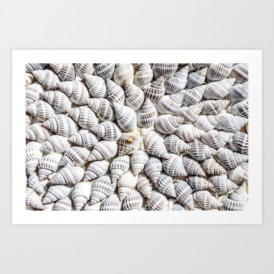 White Seashells Pattern Art Print