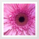 Spectacularly Pink by jennycarter