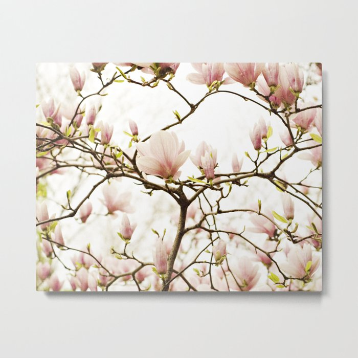 Queen For A Day Pink Magnolia Flower Metal Print