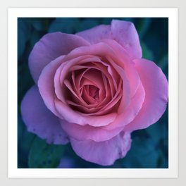 bed of roses: lilac Art Print