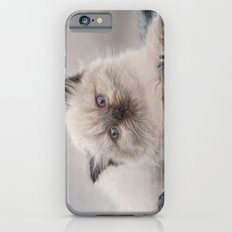 Pretty Kitty iPhone 6s Slim Case
