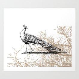 Peacock print Art Print