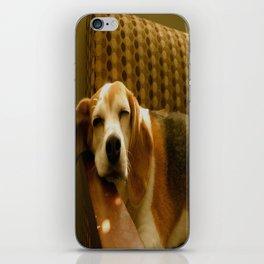 Sleepy Beagle iPhone Skin