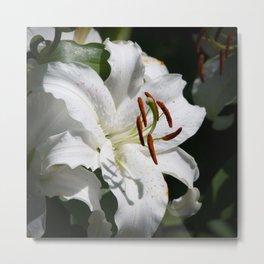 White Lily by Teresa Thompson Metal Print