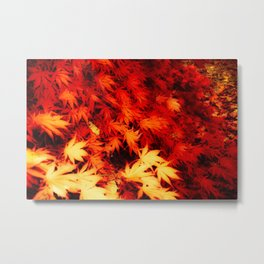 Magnificent Maple Metal Print