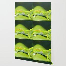 Madagascar Day Gecko Macro Close Up Wallpaper