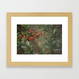 Clearance Bush Framed Art Print