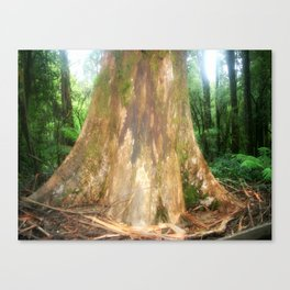 "Mountain Ash Tree (Aka ""The Big Boy"") Canvas Print"