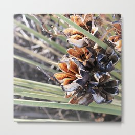 yucca I (flowers exploding in winter) Metal Print