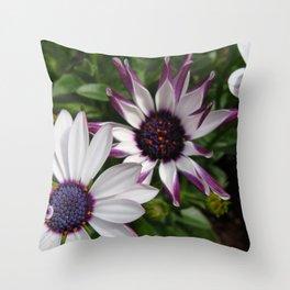 Purple and White Osteospermum Throw Pillow