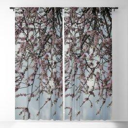 Almond tree blossom Blackout Curtain