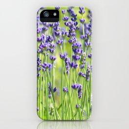 Lavender 0137 iPhone Case
