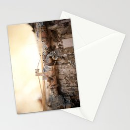 Molting Birch Stationery Cards