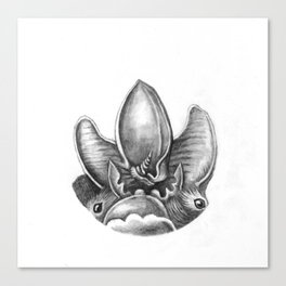 Bats IV Canvas Print