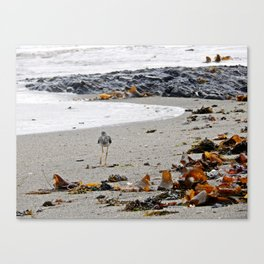 Greater Yellowlegs Strolling on the Beach Canvas Print