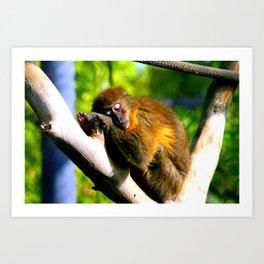 Monkey Sleeping Art Print