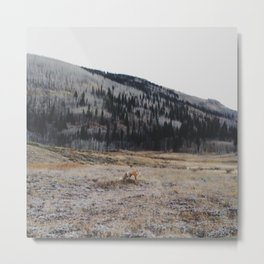 Silverton Fox Metal Print