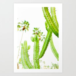 Cactus Desert Photo Art Print
