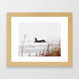 Three Otters Framed Art Print
