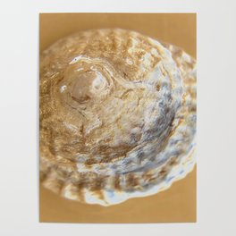 golden seashell Poster