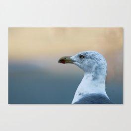 Seagull Bird Portrait Closeup Canvas Print