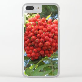 Red rowan clusters Clear iPhone Case