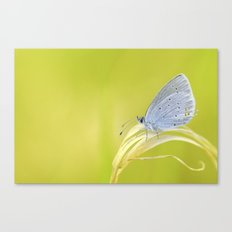 Small Blue Canvas Print
