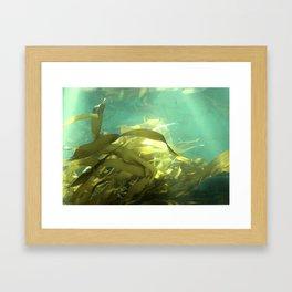 Down under Framed Art Print