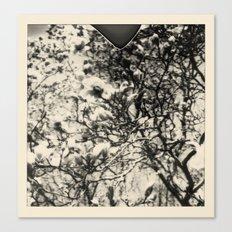 magnolia +2 Canvas Print
