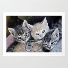 Kittens, 3 balls of tenderness Art Print