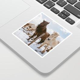 Icelandic Horses Sticker
