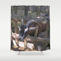 butcher billy Shower Curtains featuring Billy-Goat by MehrFarbeimLeben