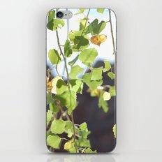 Red Rocks through Leaves iPhone & iPod Skin