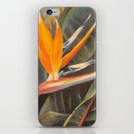 Bird of Paradise 3  iPhone Skin