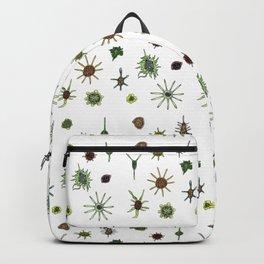 dorstenia mania color Backpack