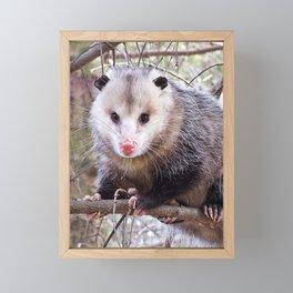 Possum Staredown Framed Mini Art Print