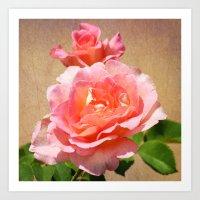 Pink Roses in Bloom Art Print