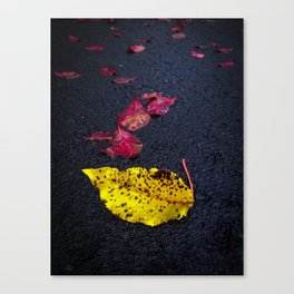 Leaves fallen on a road Canvas Print