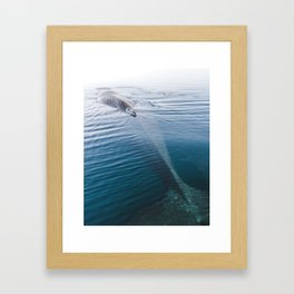 Whale bathing in the Sun of East Greenland Framed Art Print