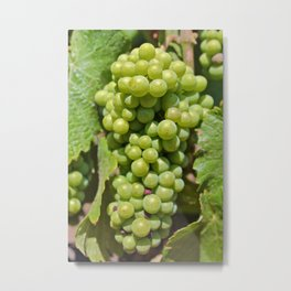 On the Vine Metal Print