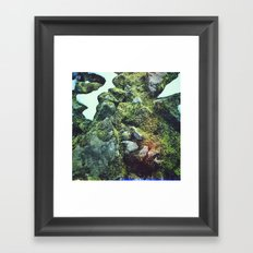Moss on rocks number 2 Framed Art Print