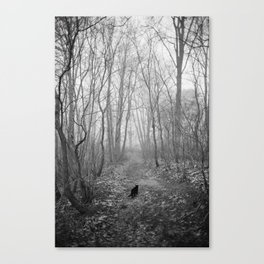 Black cat alone in the forest Canvas Print