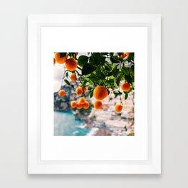 Amalfi Coast Oranges Framed Art Print