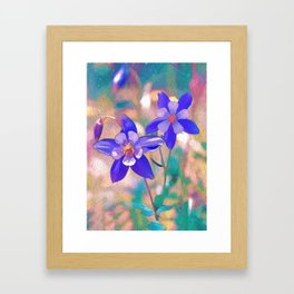 Colorado Columbine Flower Framed Art Print