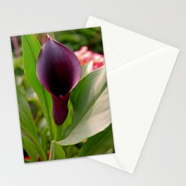 Zantedeschia (Odessa) Stationery Cards